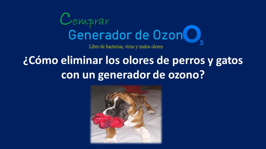 Cómo eliminar los malos olores de mascotas con un generador de ozono